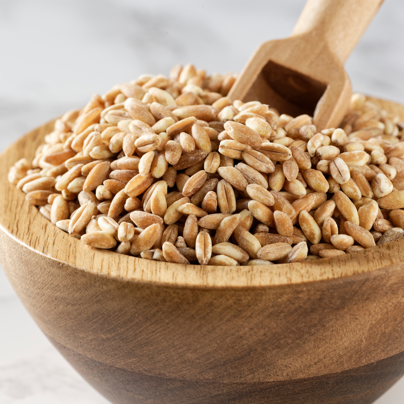 Types of grains - Farro (picture)