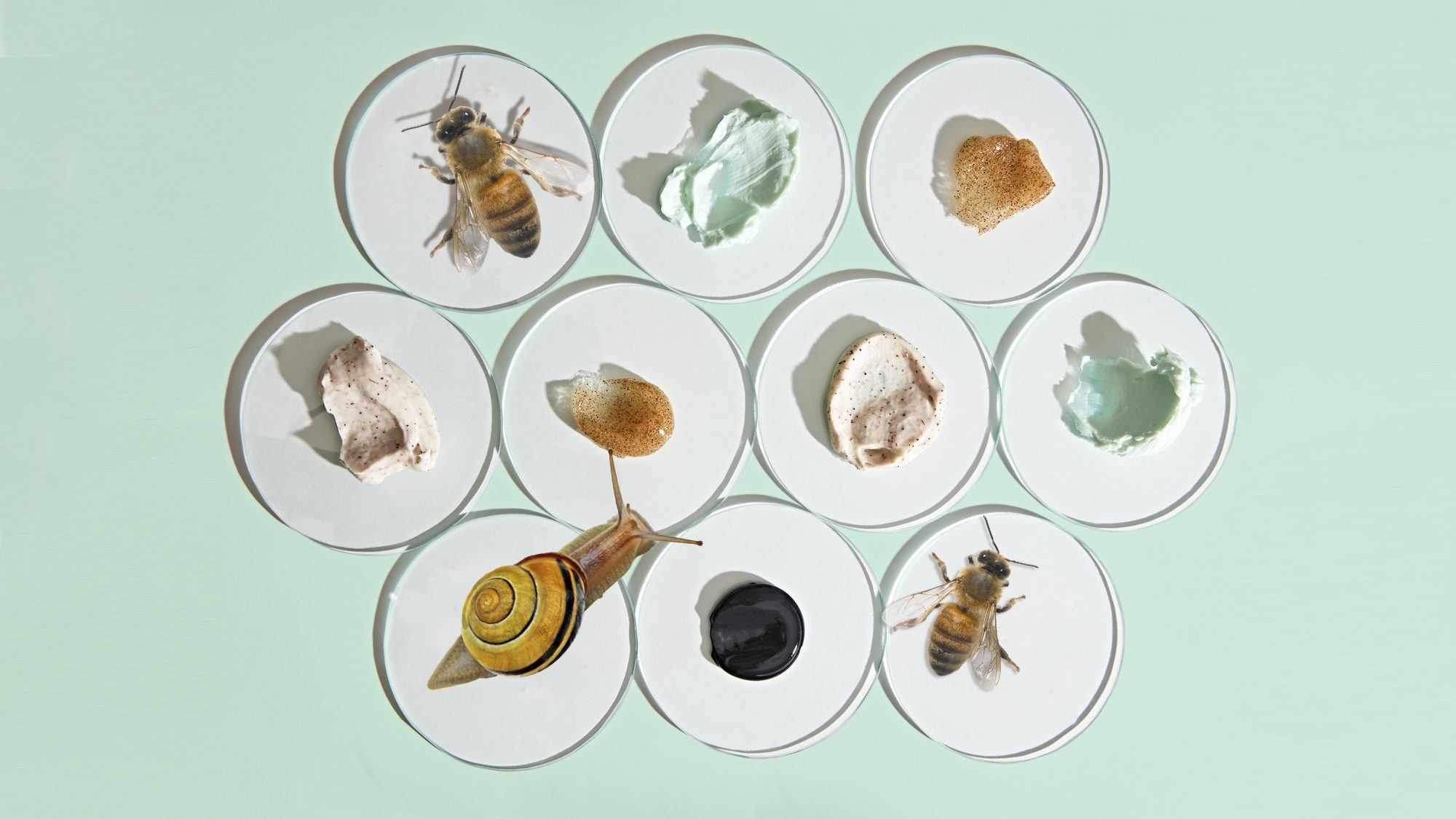 weird anti-aging ingredients: snail, bee, and more