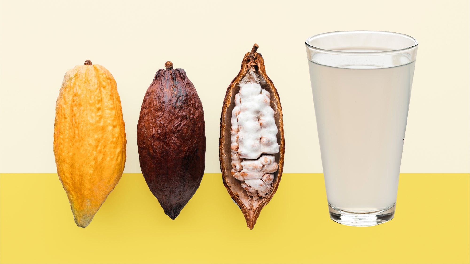 cacao-water: cacao beans and cacao water