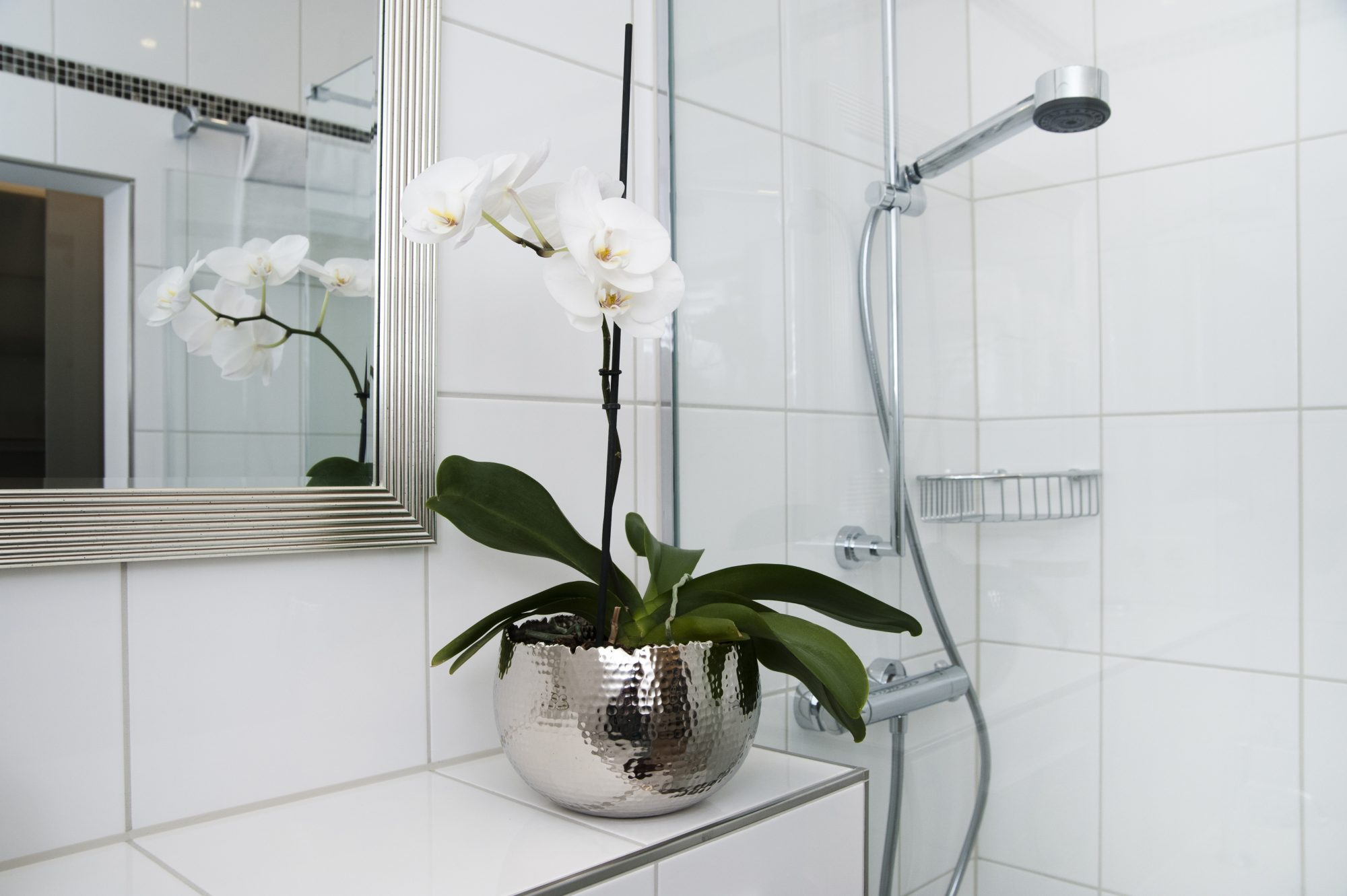 Best Shower Plants, Orchid in Shower