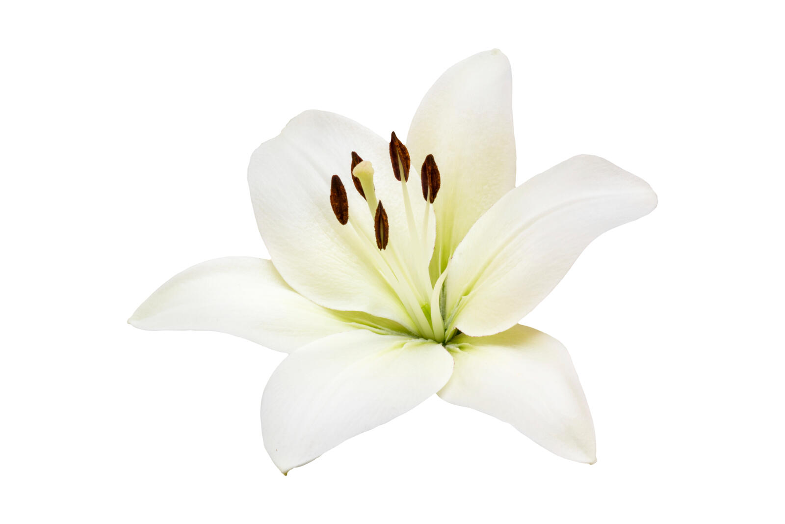 Lilies Flower Care Tips