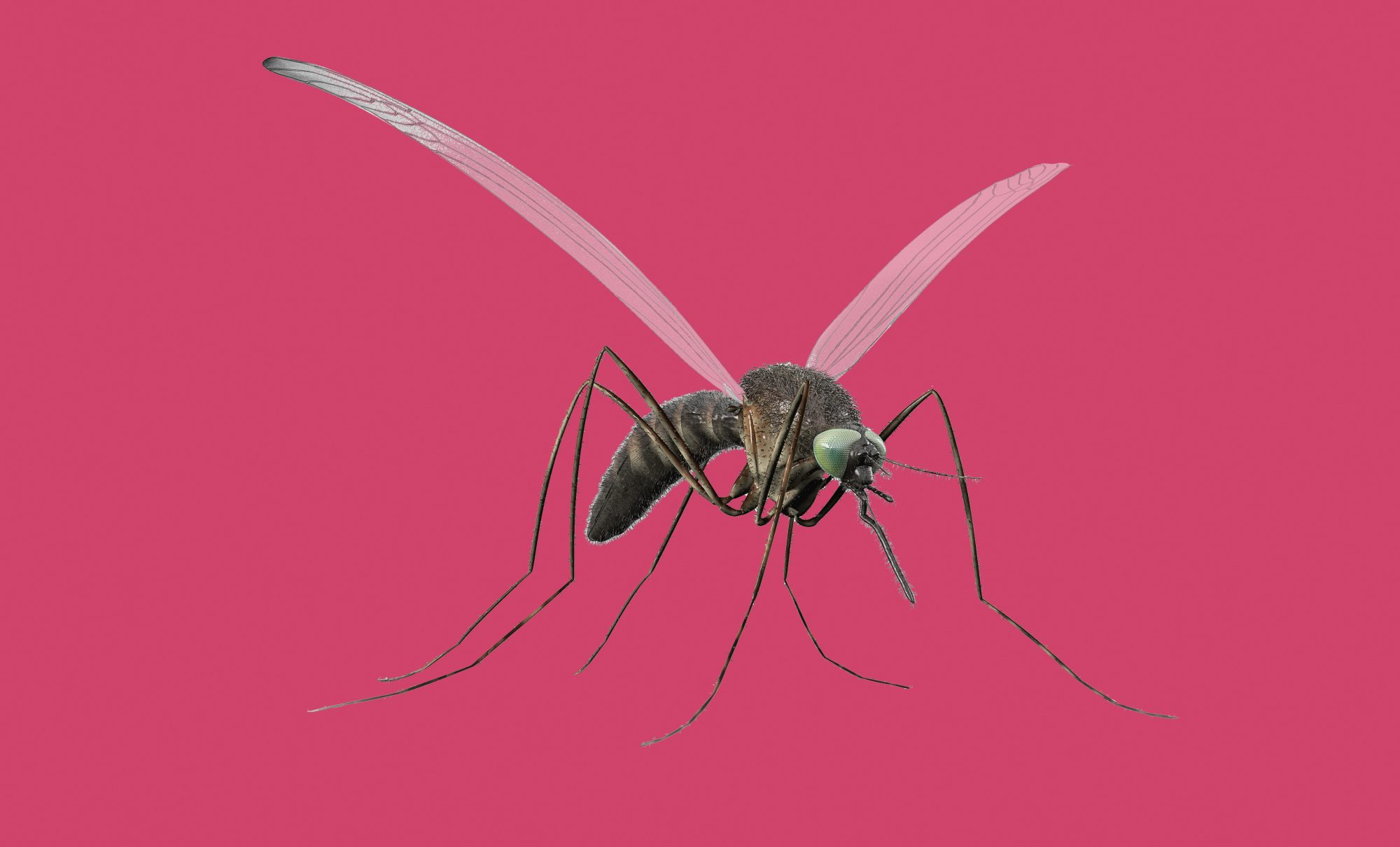 8 Ways to Stop Bug Bites From Itching: Common mosquito insect on a pink background