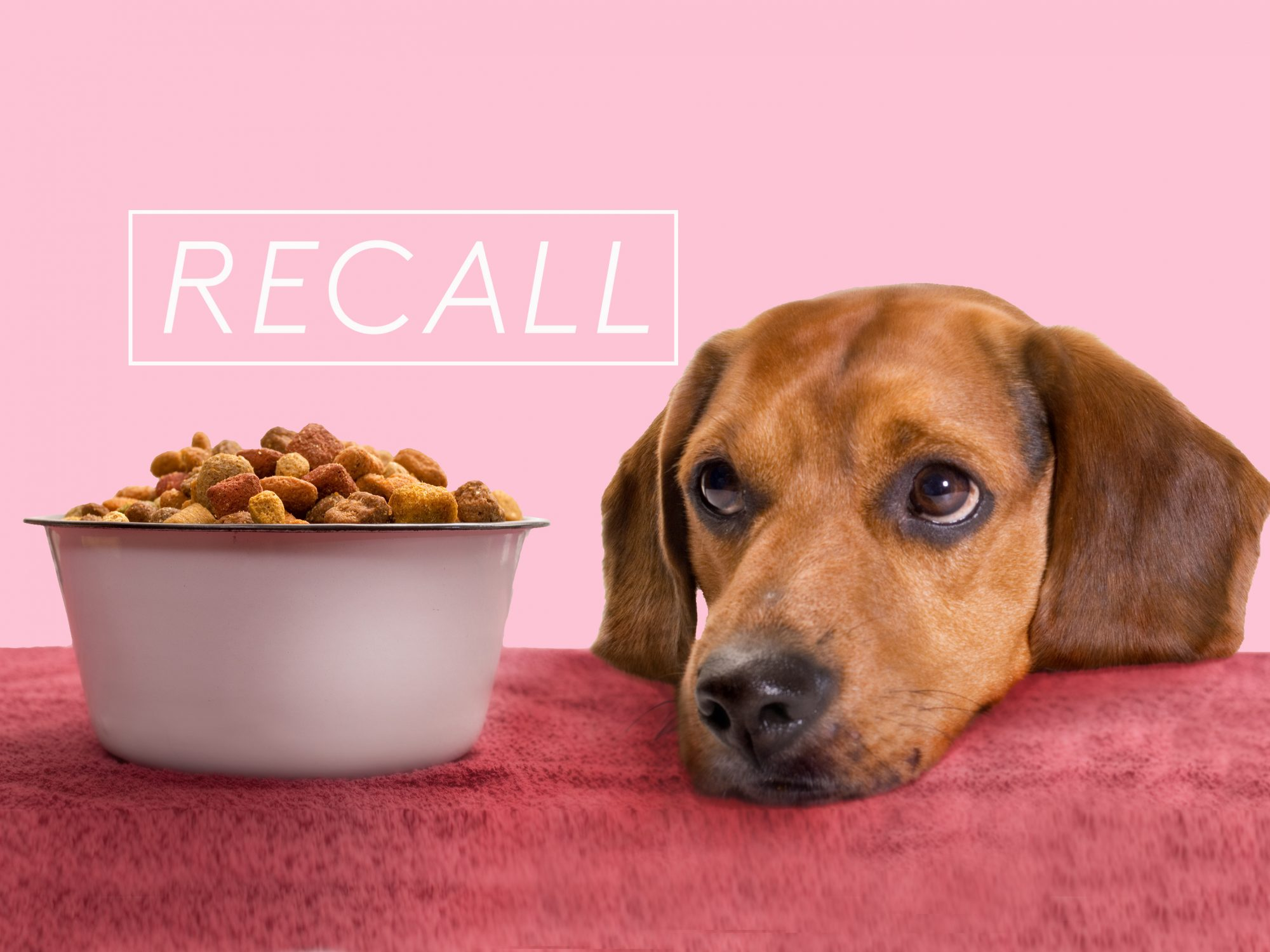 Freshpet Recalling Small Amount of Dog Food, Including Some Accidentally Sent To Stores