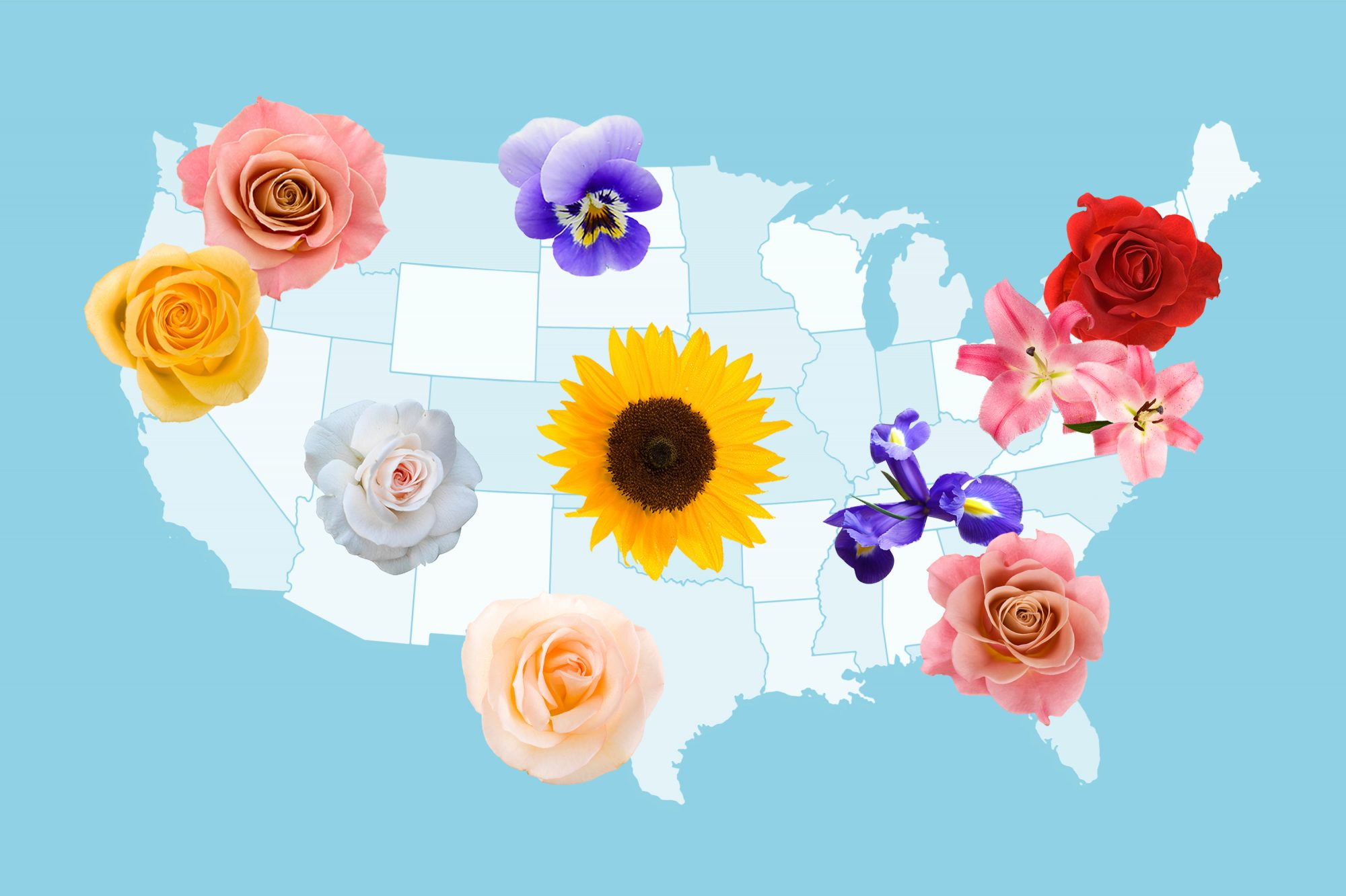 A New Survey Reveals the Most Popular Flowers Grown in Each State