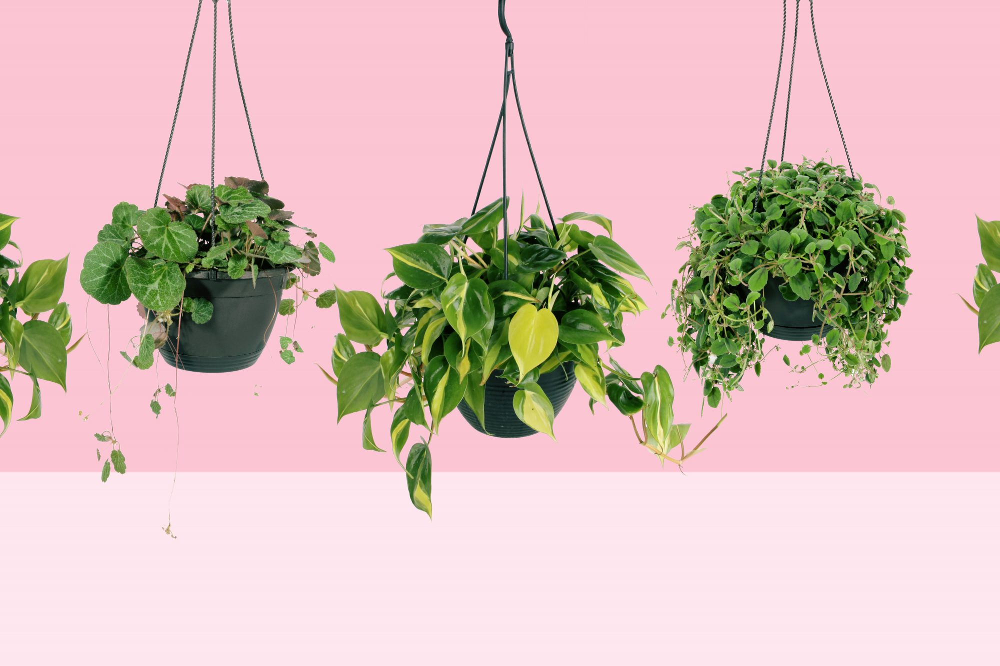indoor hanging plants for every room