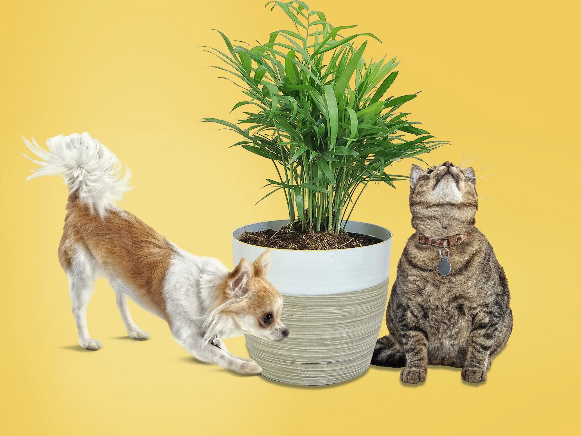 Pet-Friendly House Plants for Cats and Dogs, pets with plants