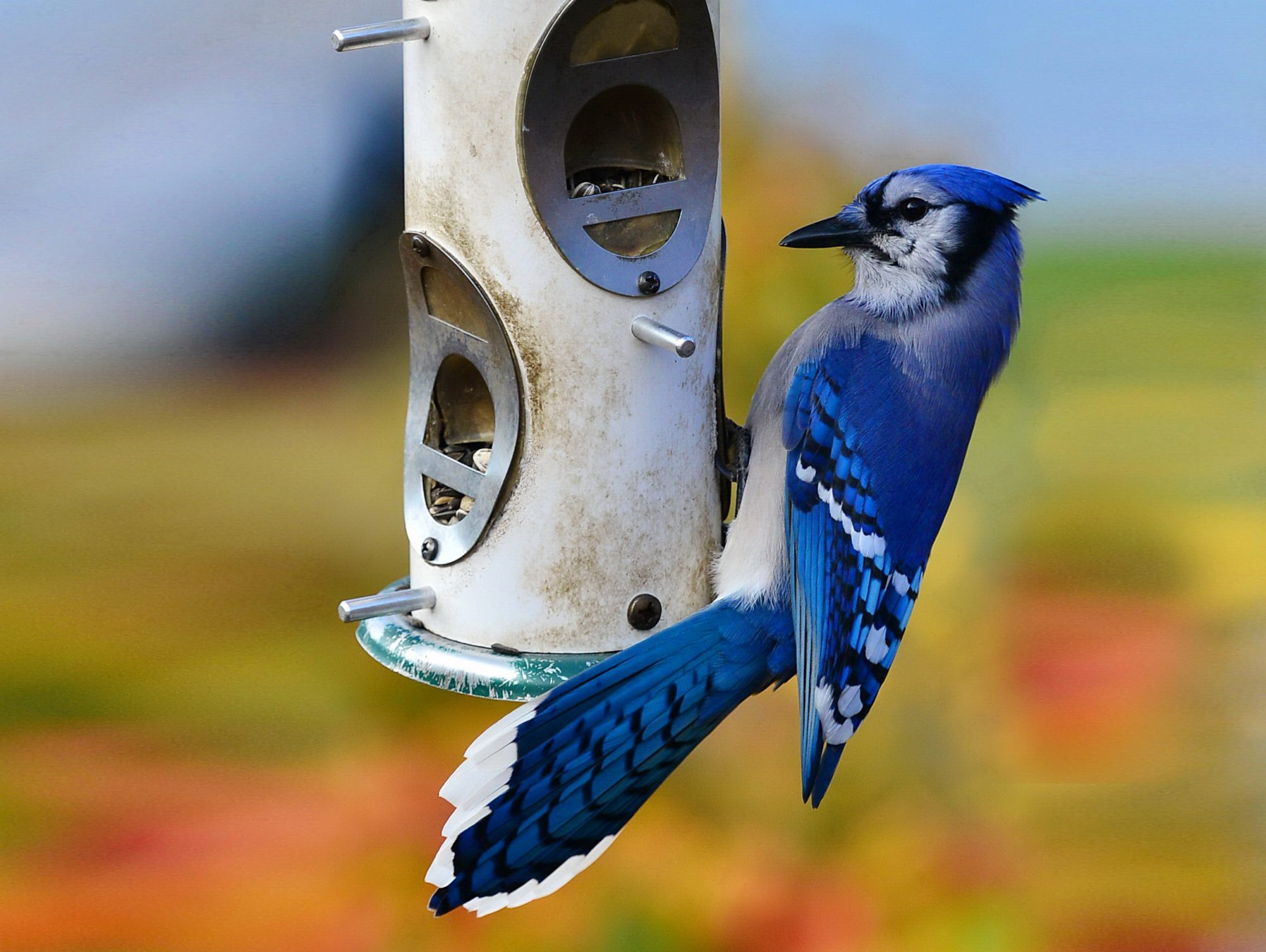 New songbird illness: Here's Why You Might Want to Take Down Your Bird Feeders Right Now