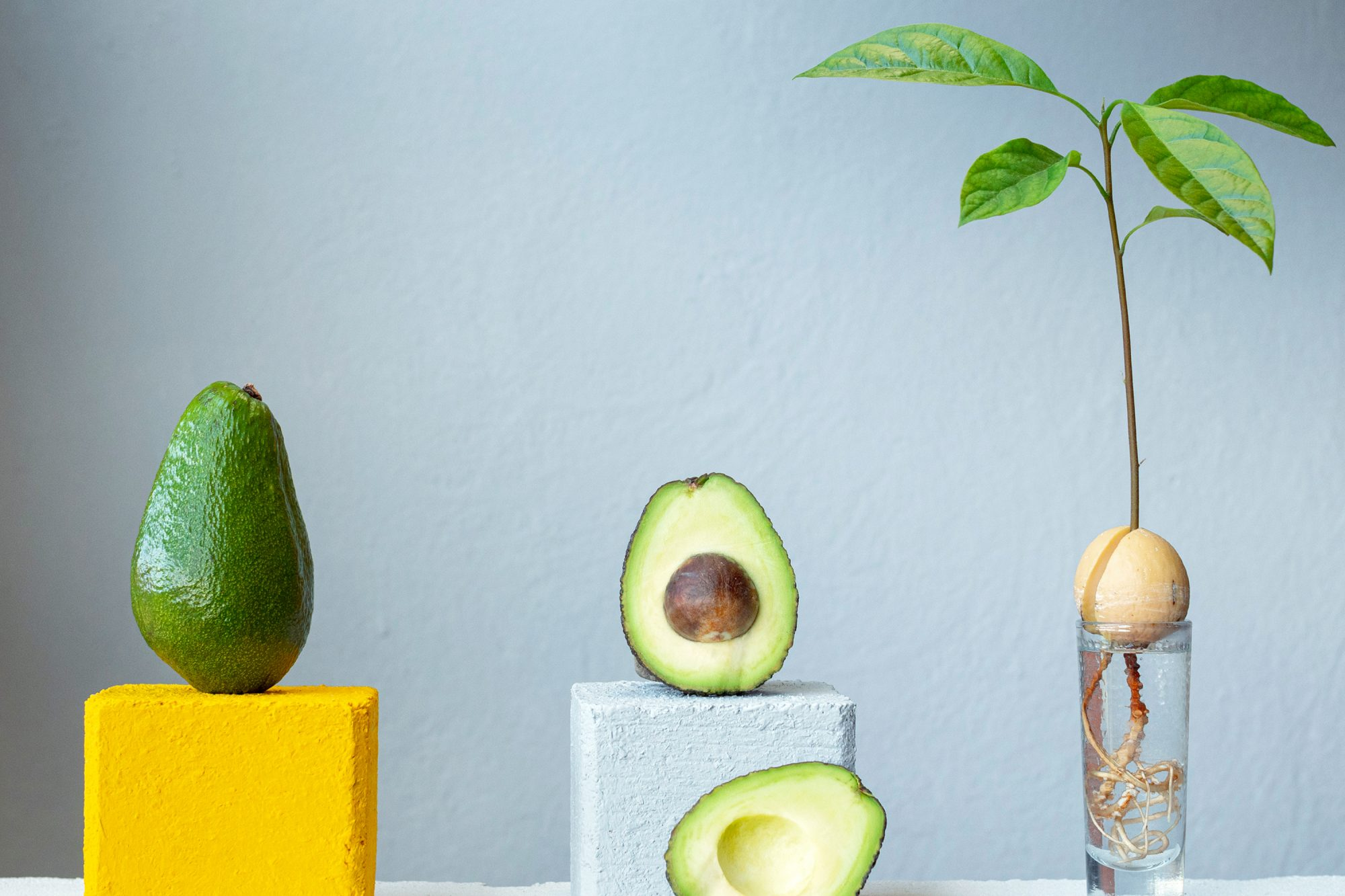 avocados and avocado plant in water