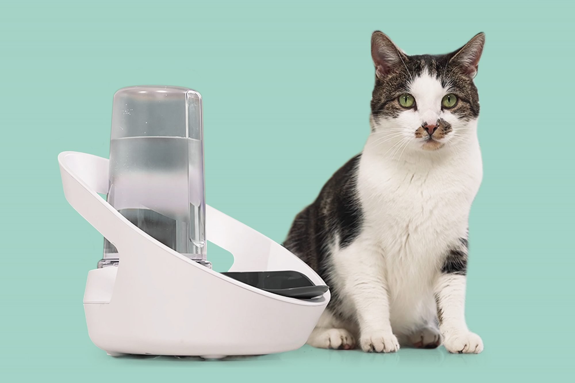 smart drinking bowl for cats