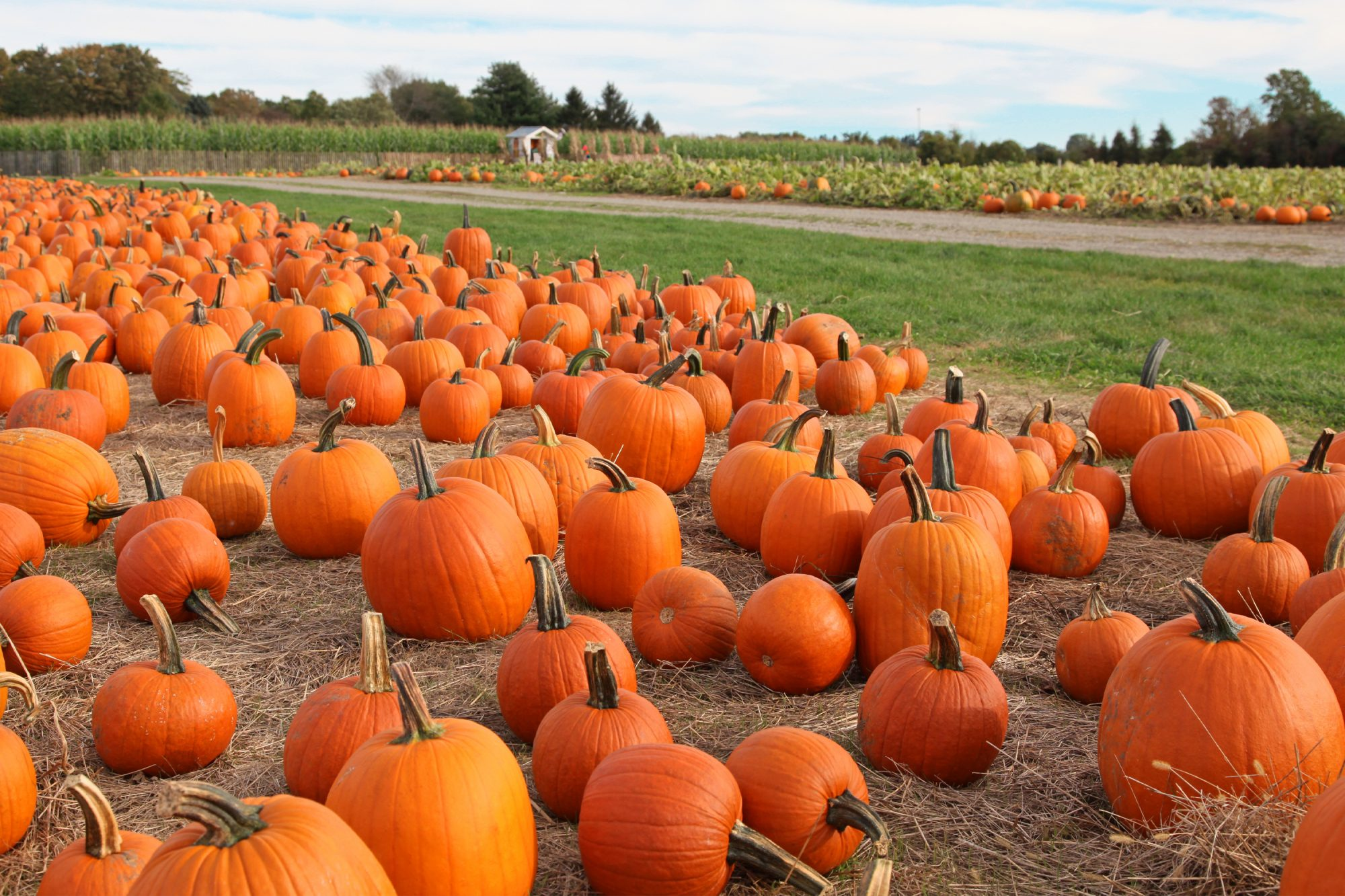 pumpkin patch in fall: fun things to do in October