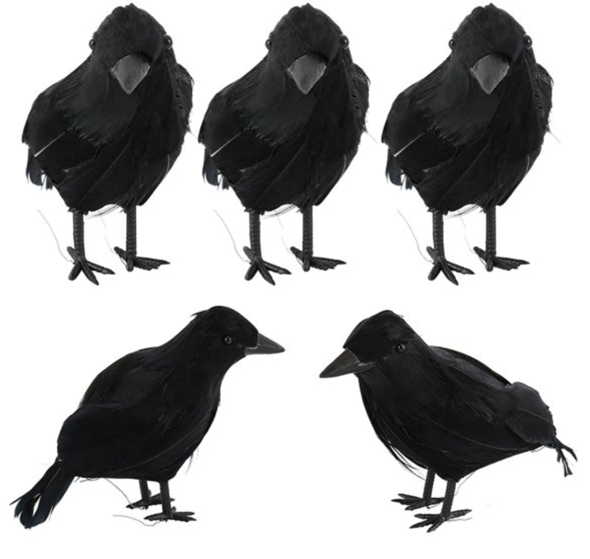 Feathered Crows