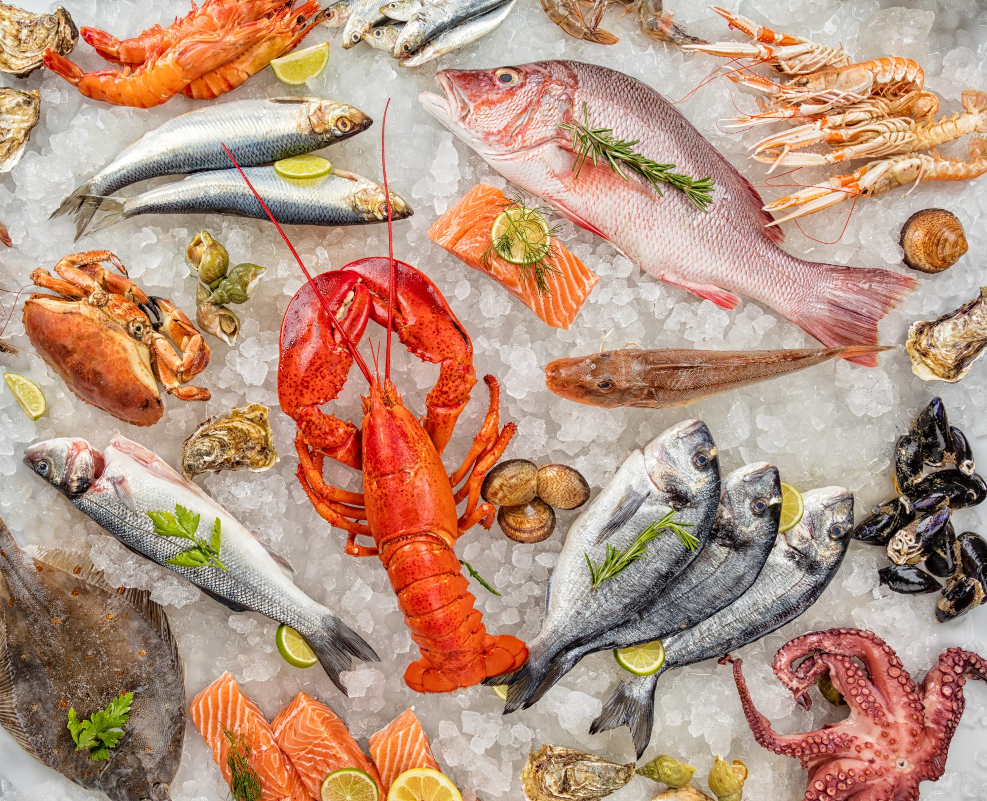 Many kind of seafood, served on crushed ice