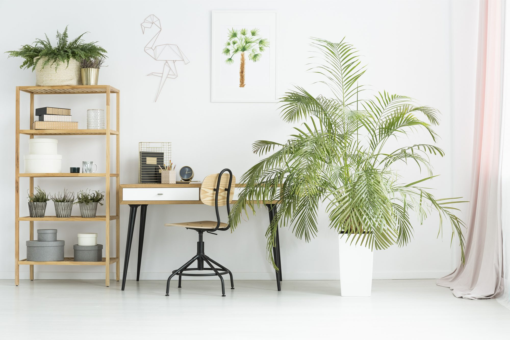 Workspace with indoor palm tree
