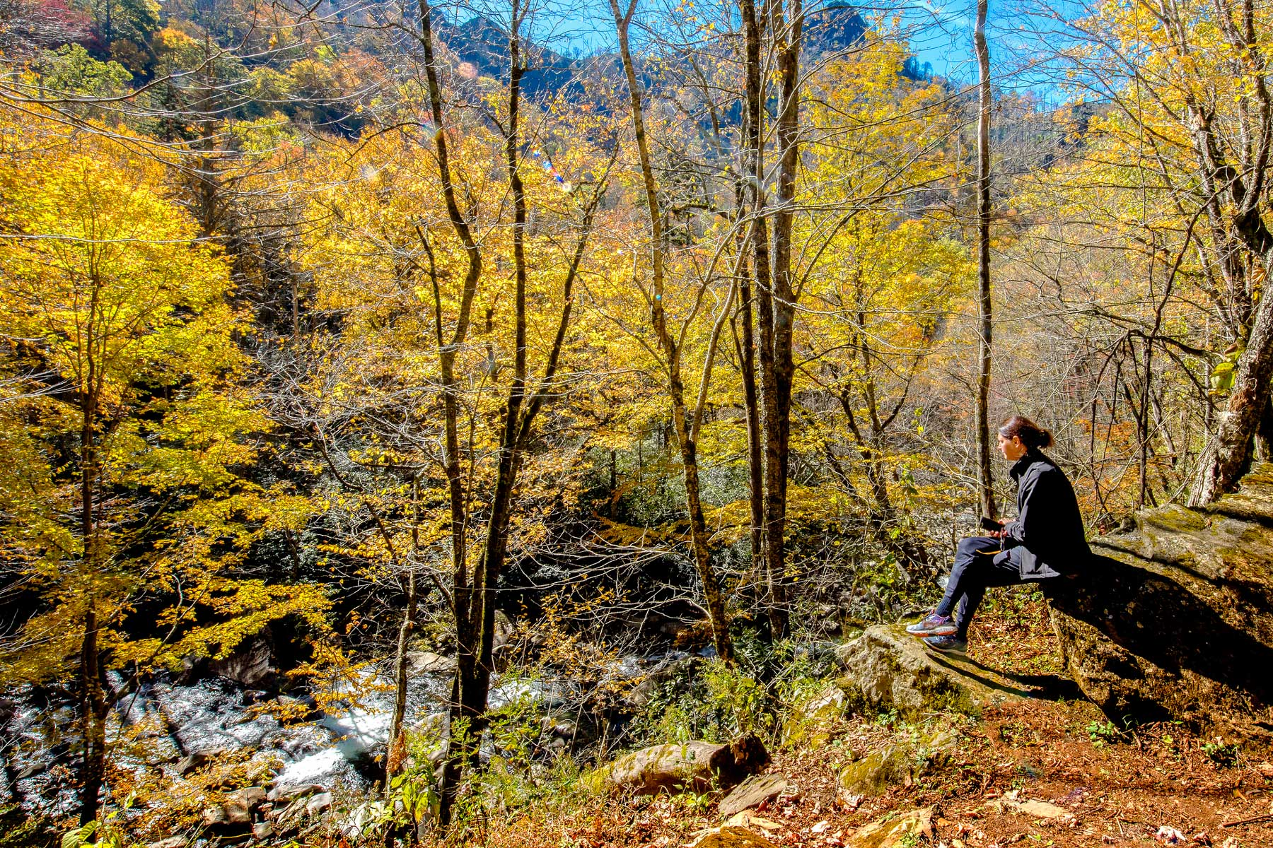 Woman viewing Peaking Fall colors in the Chimney Tops area of the Great Smoky Mountains National Park in Tennessee, USA.