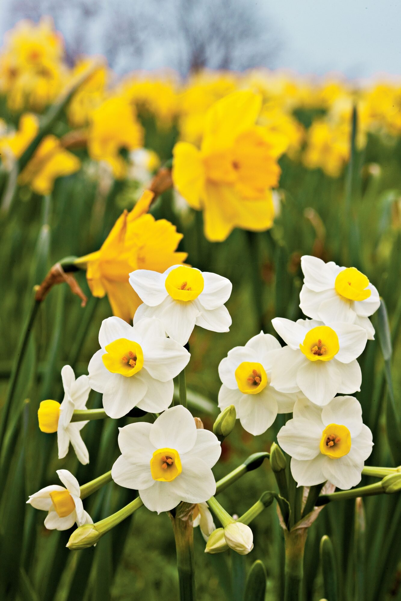 Plantageddon: What to Do to Protect Your Spring Flowers From Frost ...