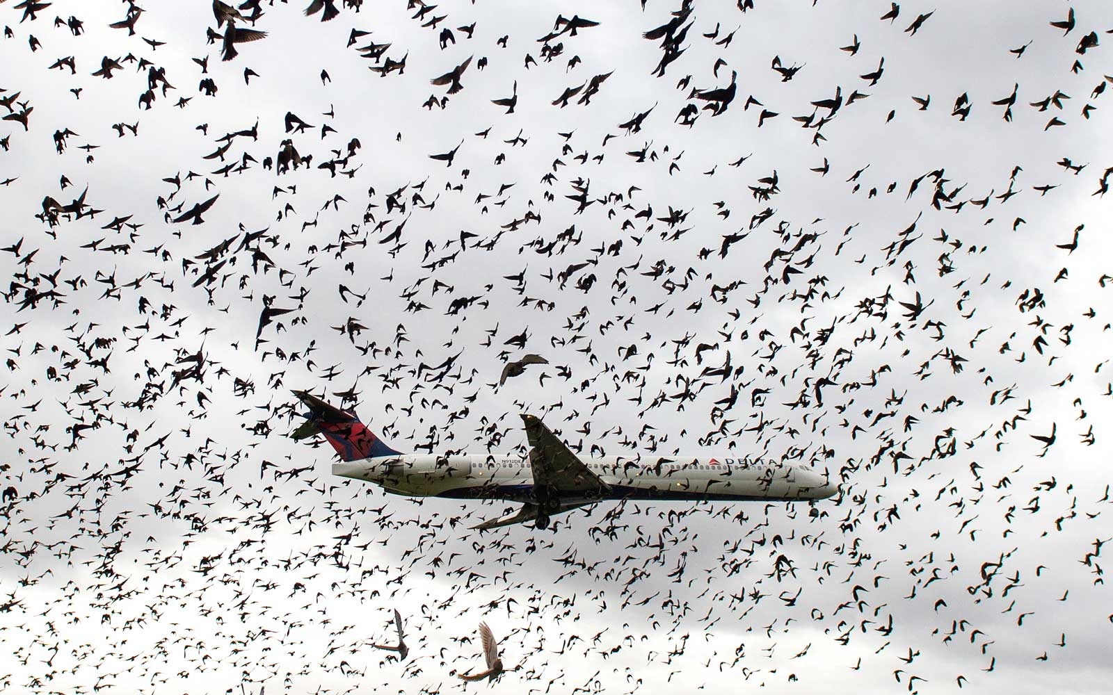 Birds Can Delay Flights