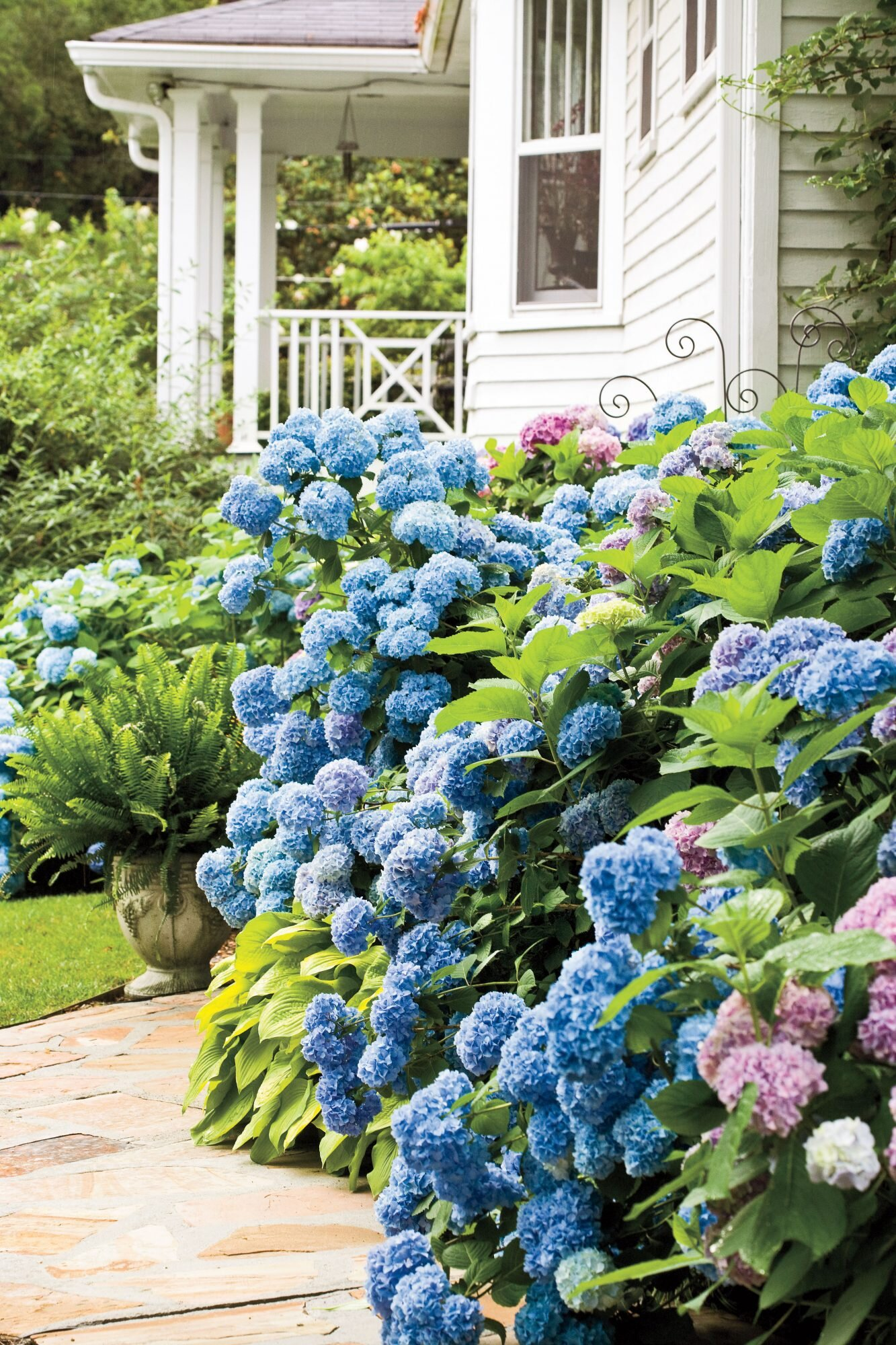 Learn When To Prune Different Hydrangeas In Your Garden Southern