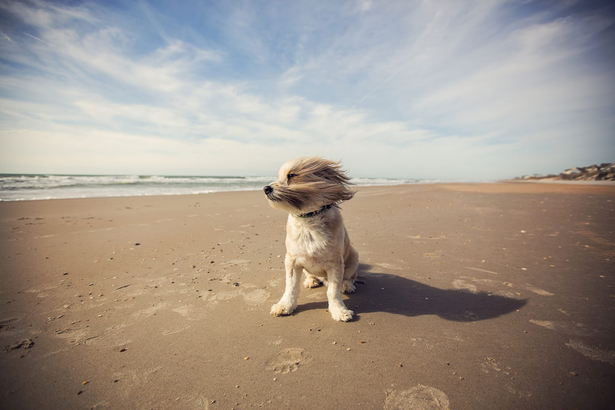 Small dog running on beach