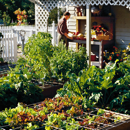 Secrets From a Homegrown Garden