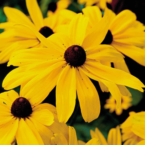 Editors' Best Flower and Vegetable Tips