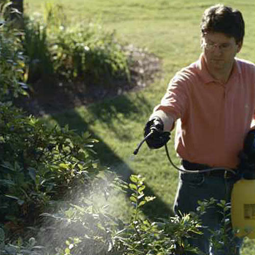 Home Gardening Tips: Not Identifying the Bug, Fungus, or Weed Before you Spray
