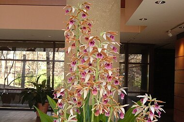 Hey Sister Get A Nun S Orchid Southern Living