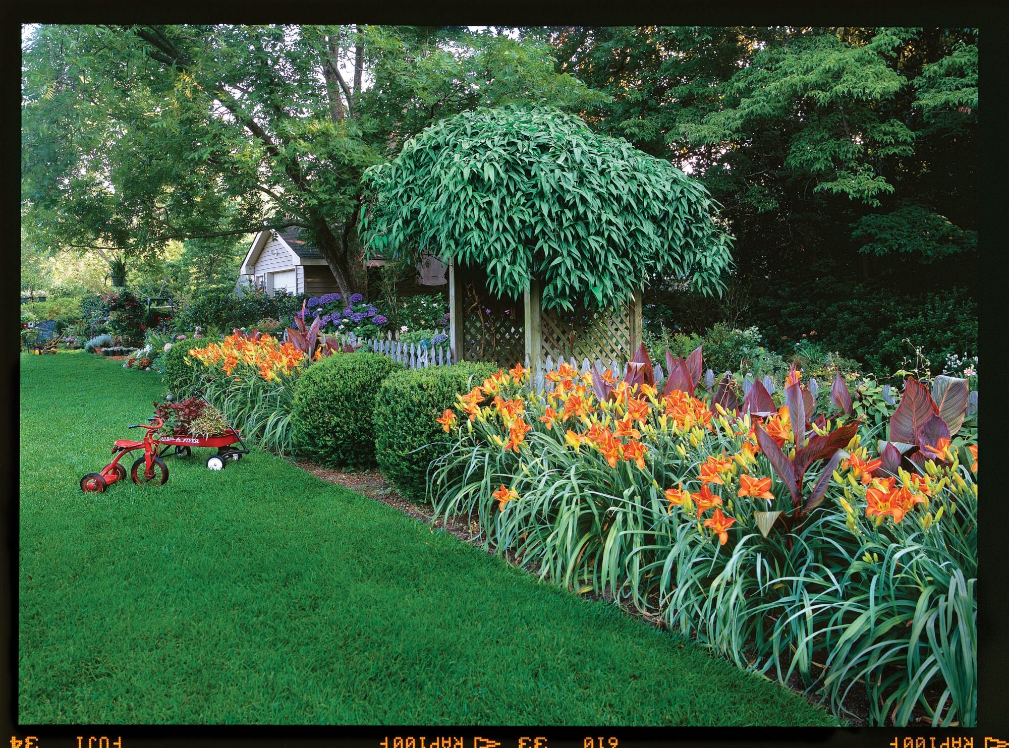 A Guide To Dividng Daylilies Southern Living