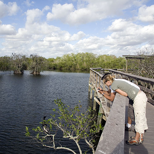 Florida Everglades: The Anhinga Trail