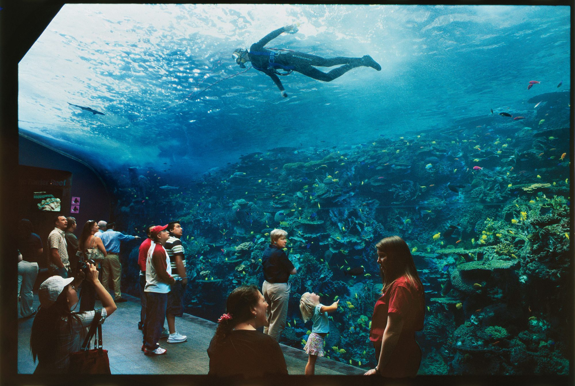 Best Southern Travel Destinations: Georgia Aquarium