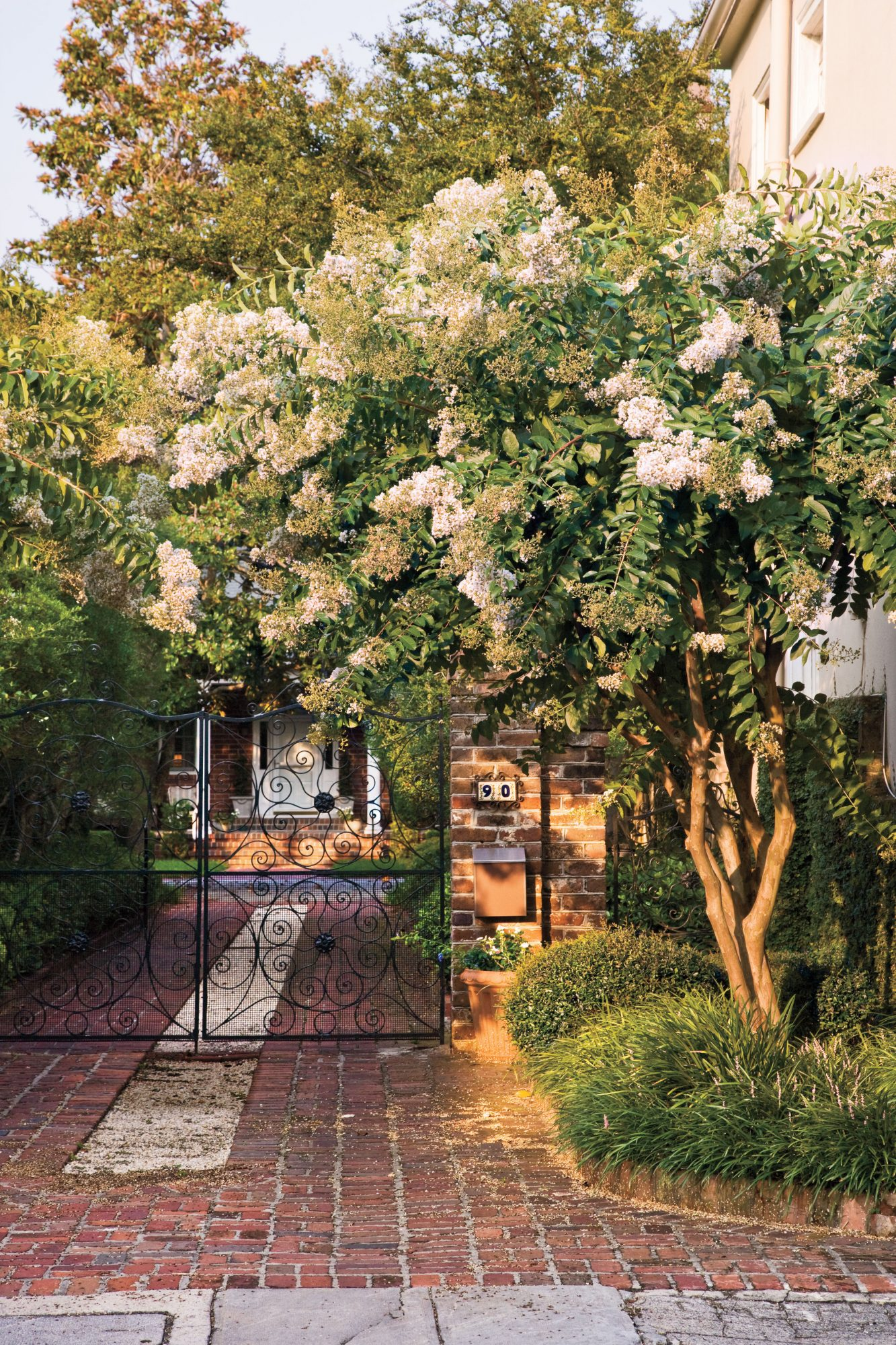 Southern Gardening: Crepe Myrtles  in Charleston