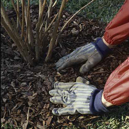 Home Gardening Tips: Planting Too Deeply