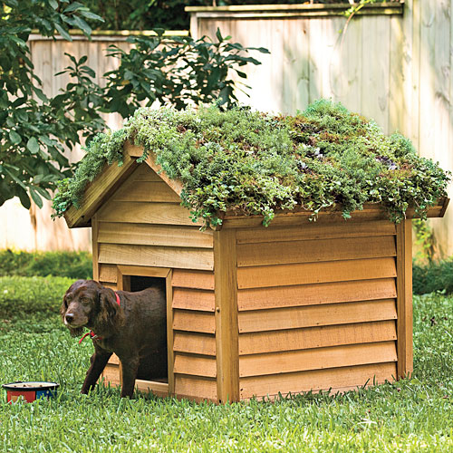 Cool Digs for Your Dog