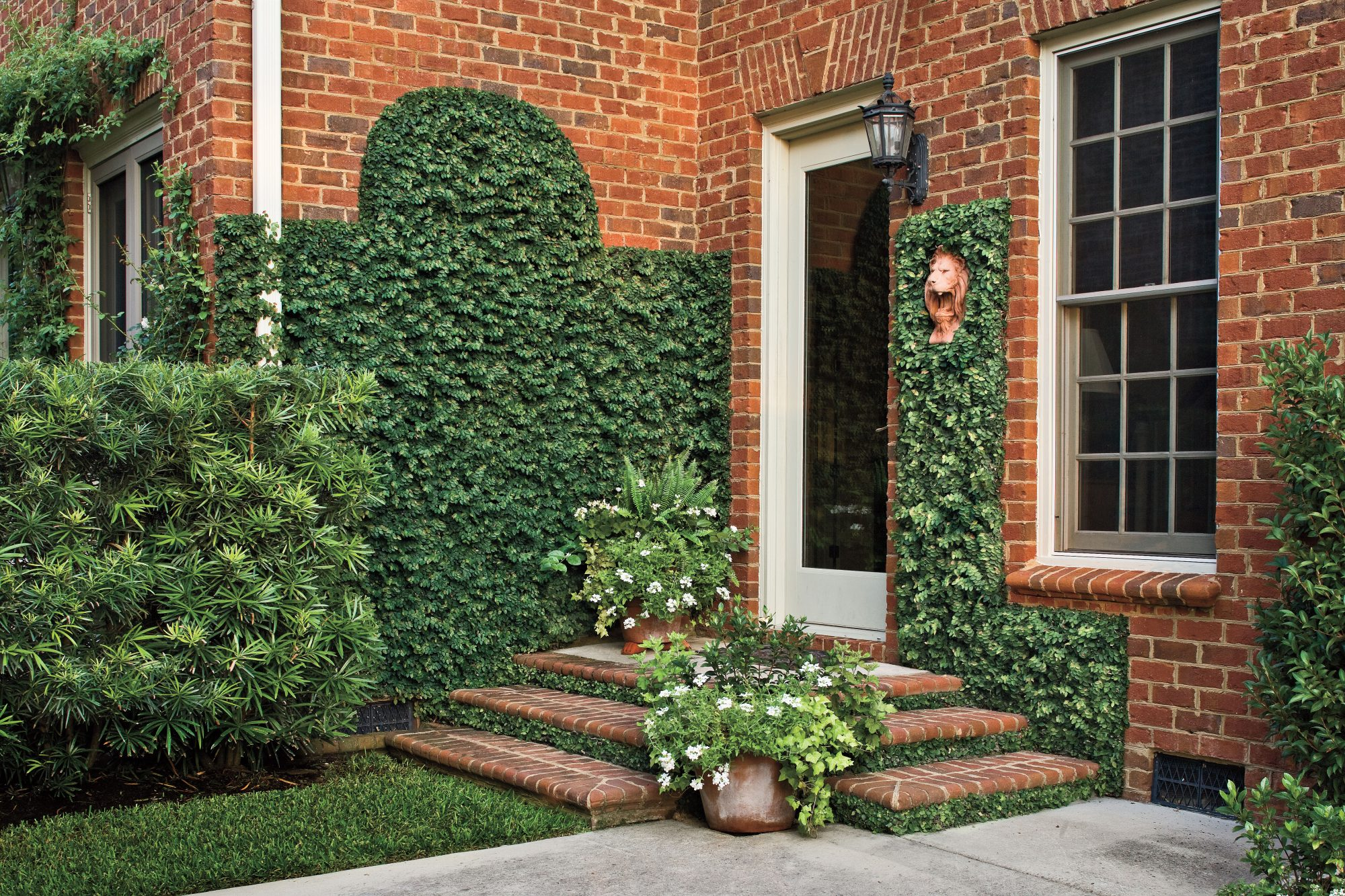 Low-Cost Charm: Creeping Fig