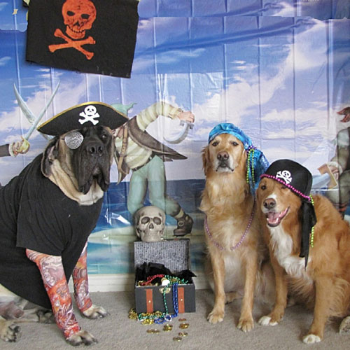 Pirate and His Wenches
