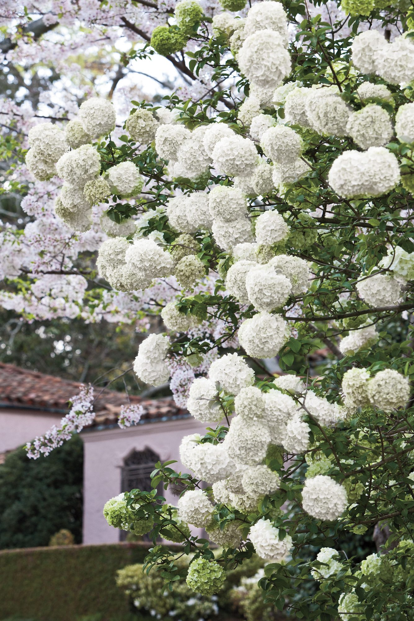 7. Grow Blooming Shrubs
