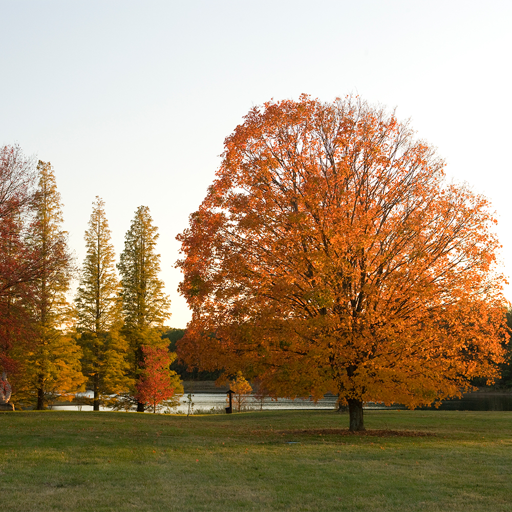 Bernheim Arboretum and Research Forest, Clermont, KY