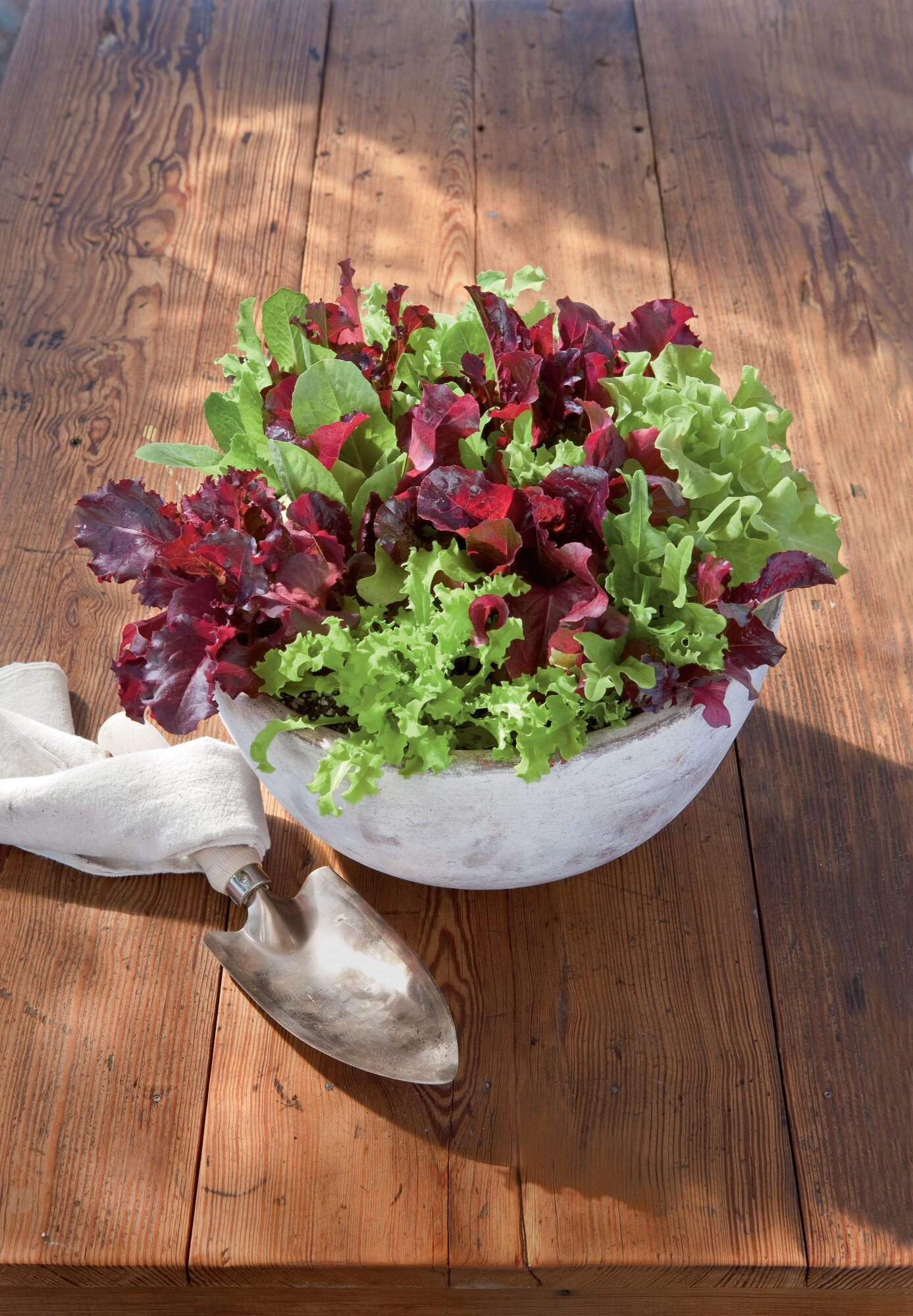 Gardening Tips For Growing Lettuce Southern Living