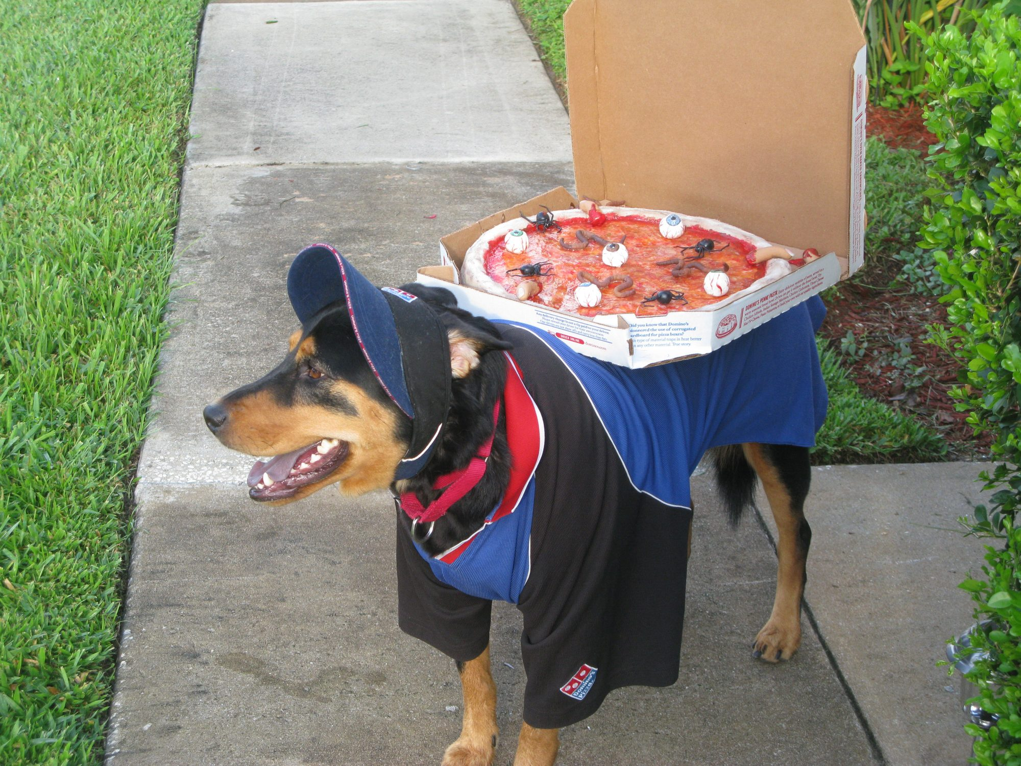 Pizza Delivery Dog Costume