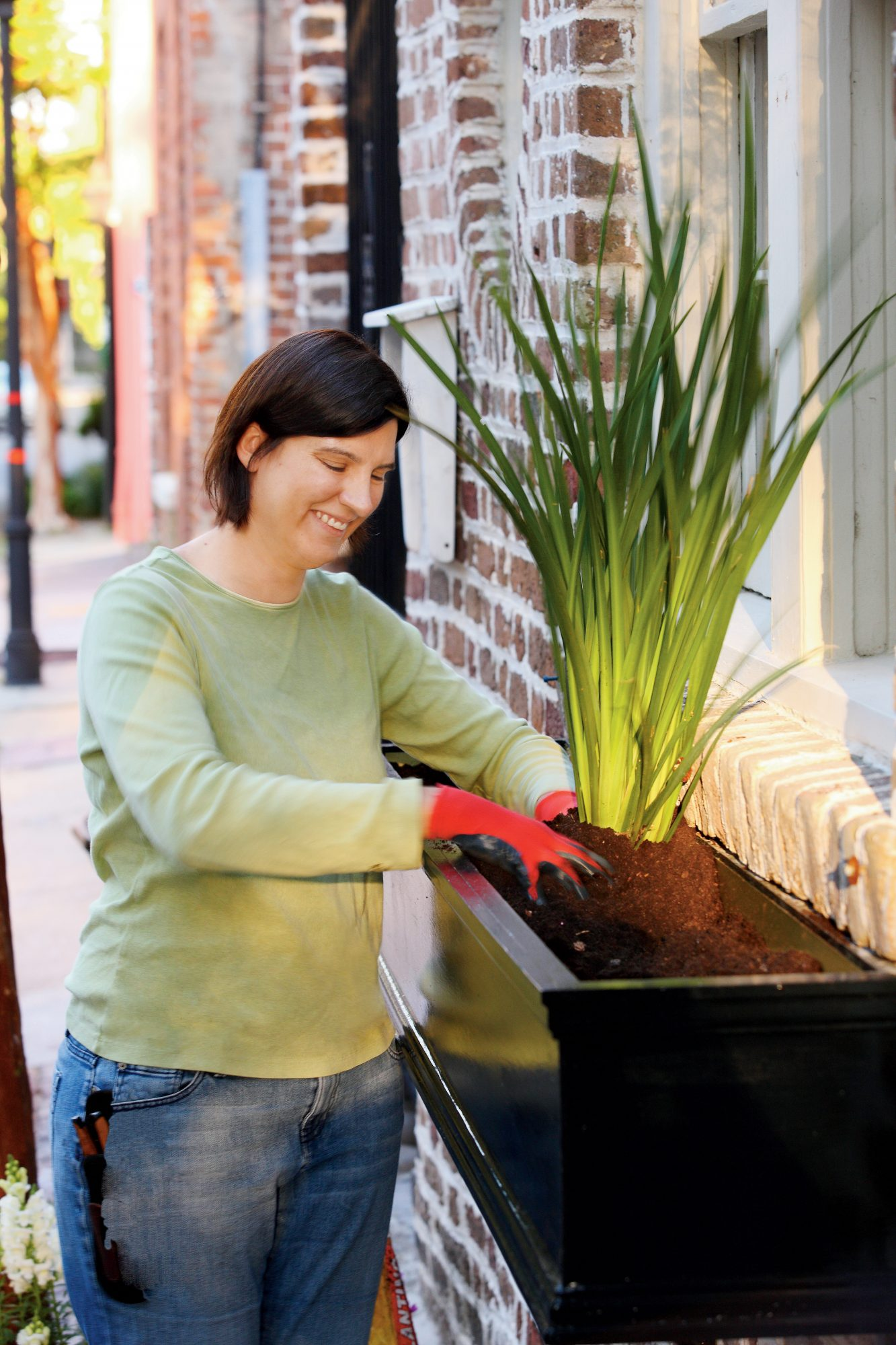 How To Plant Window Boxes