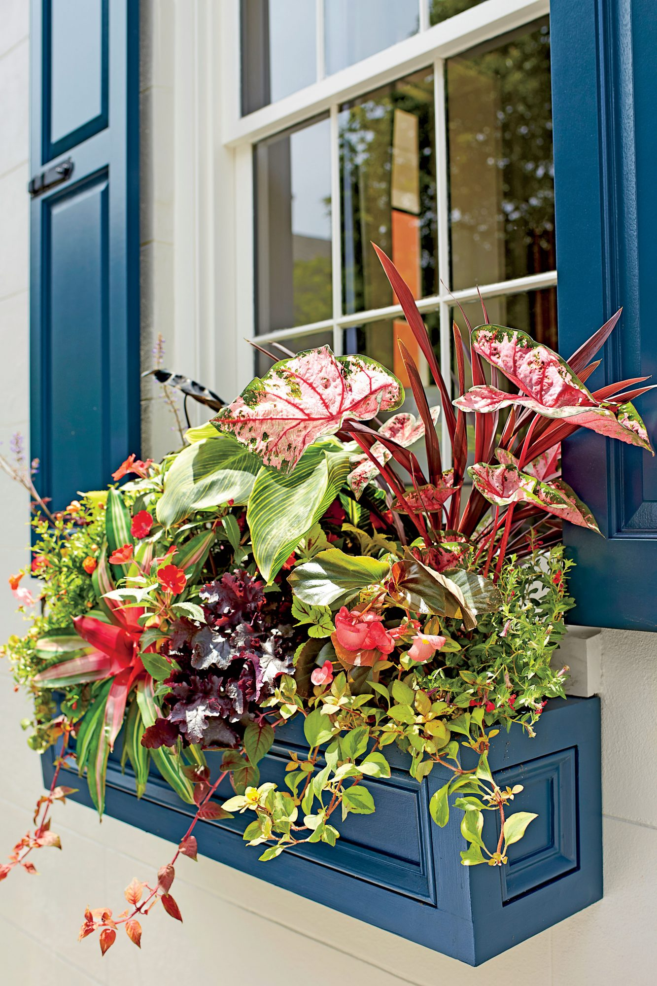 Tropical Window Box