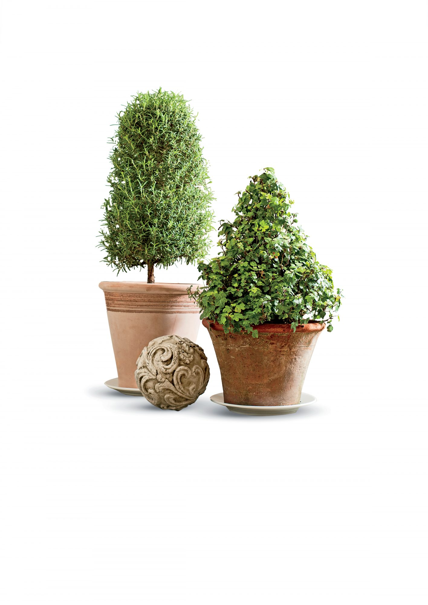 Try a Rosemary Topiary
