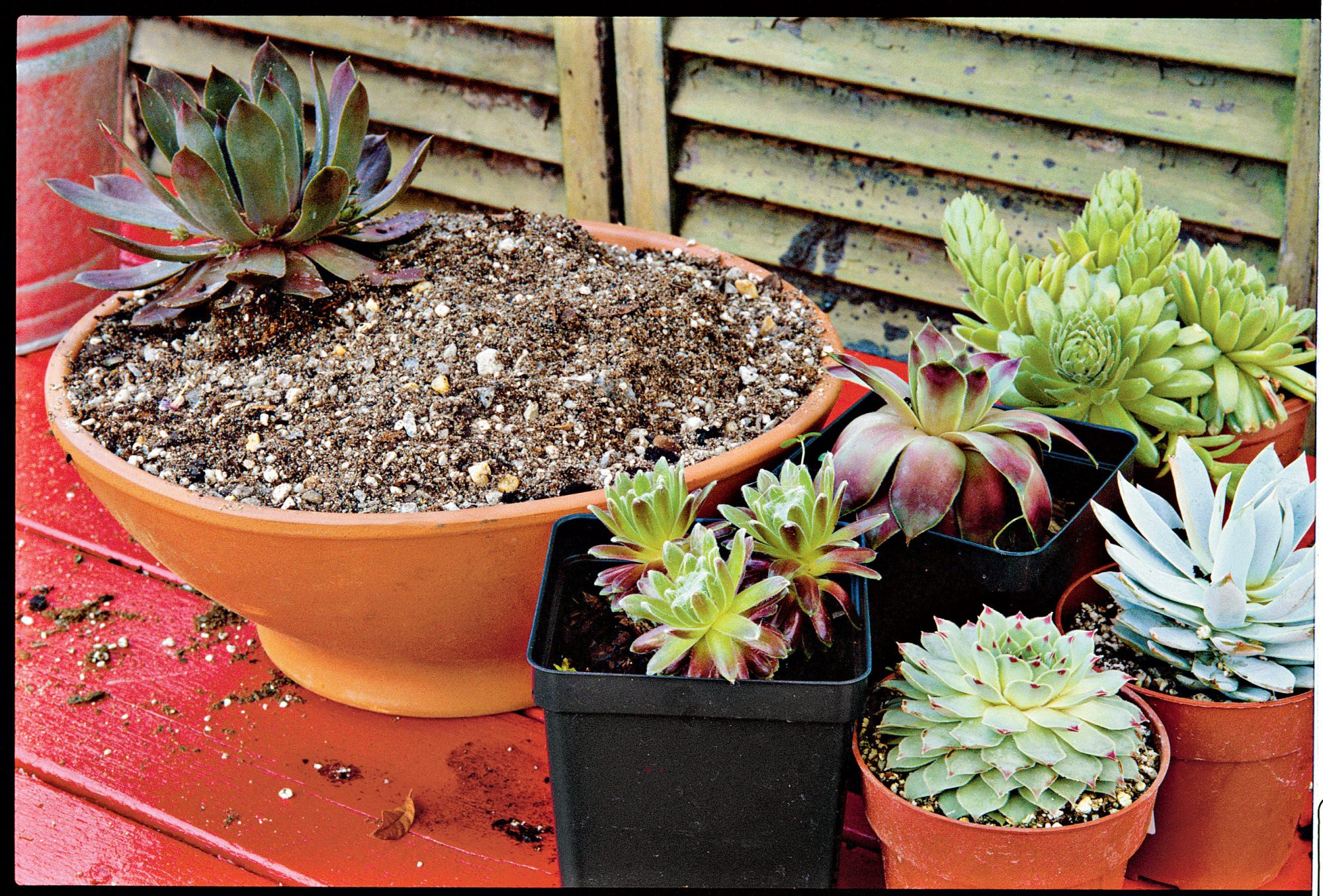 How To Plant Succulents In Containers Southern Living