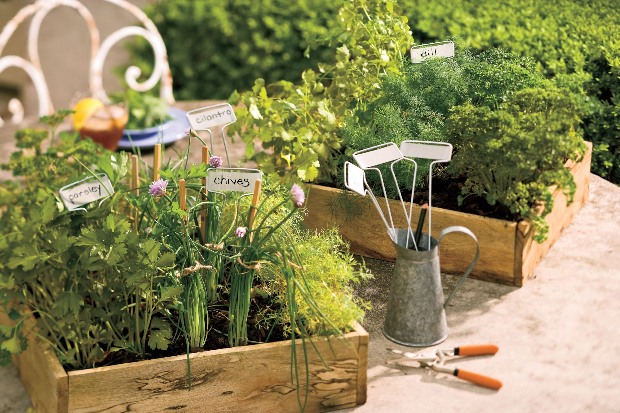 Cilantro, Parsley, and Chives Garden
