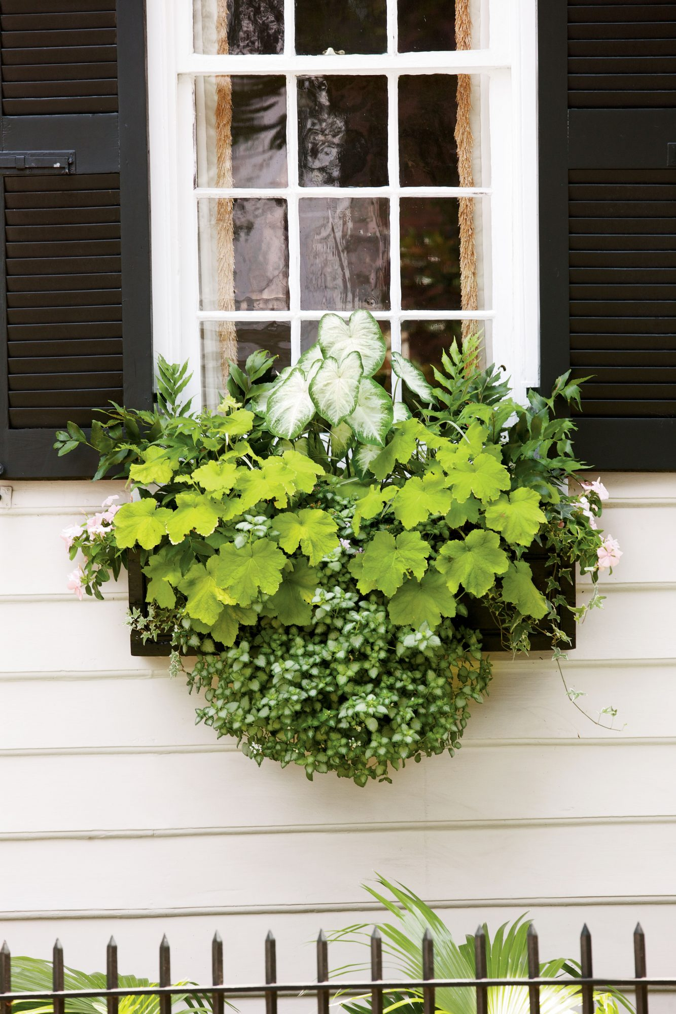 Charming Green Window Box