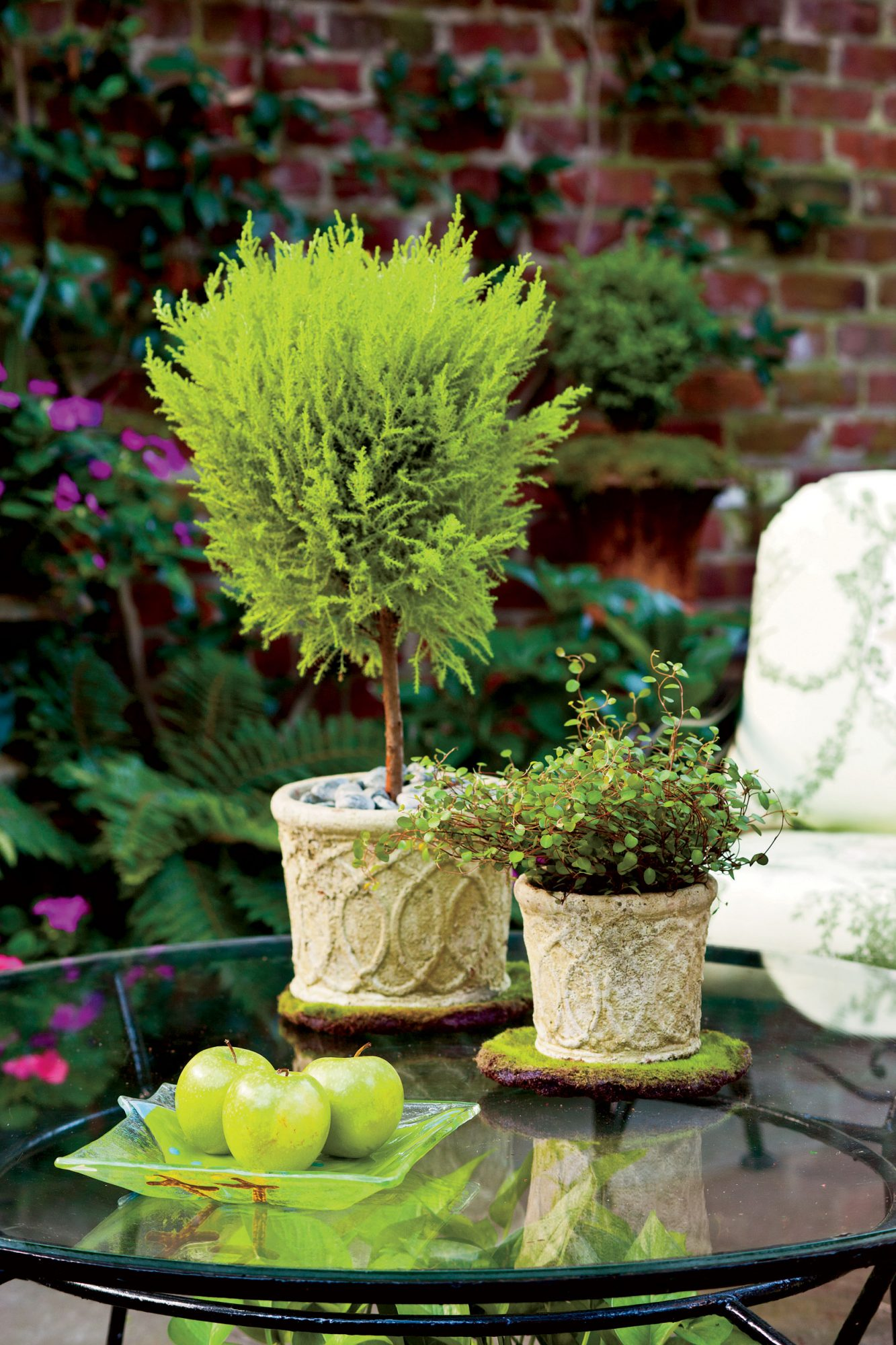 Tabletop Topiary