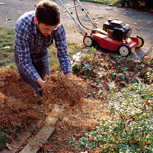 gathering-mulch-m.jpg