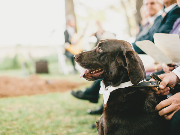 southern-wedding-pets-at-ceremony.jpg