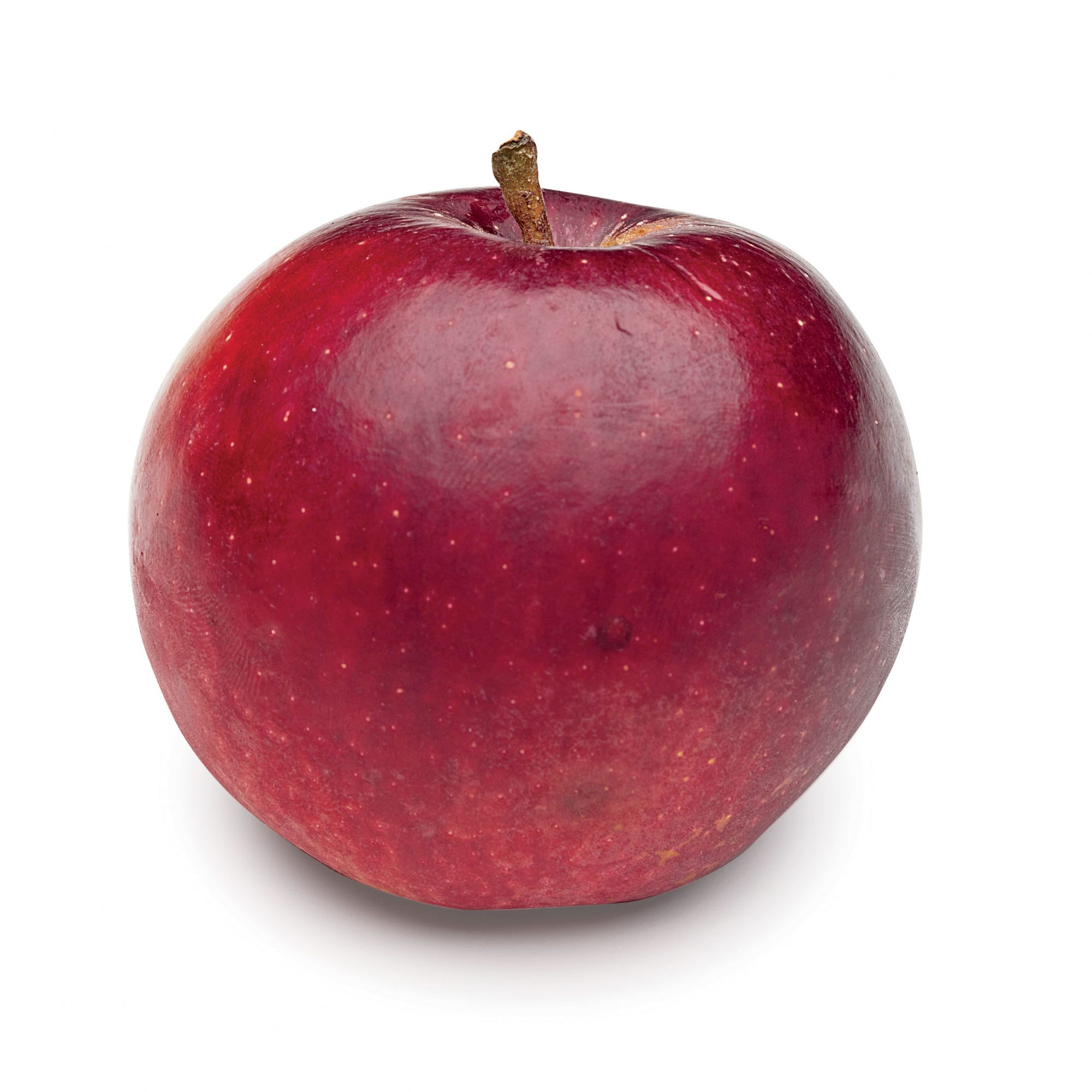 Arkansas Black Apple