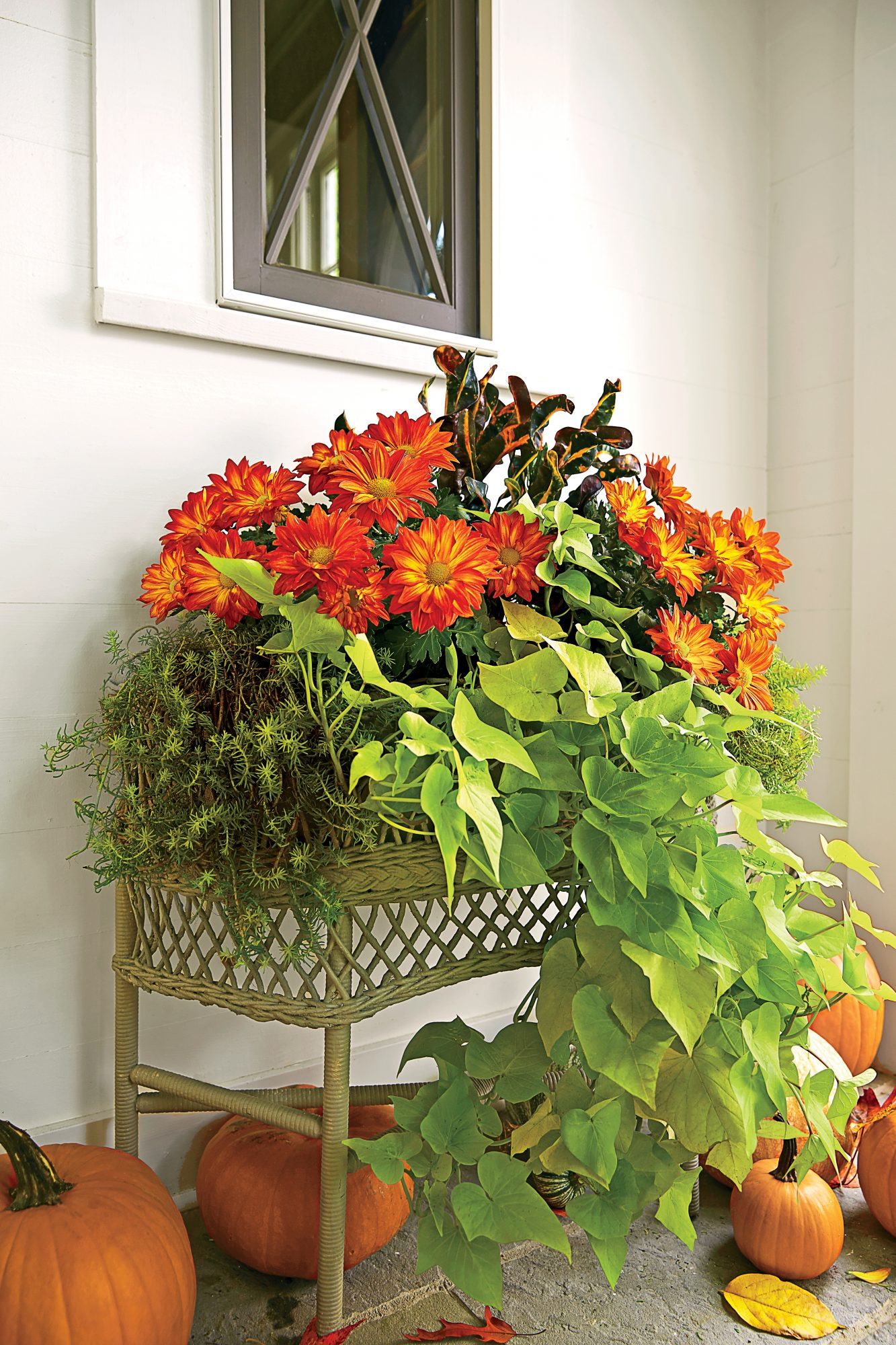 Versatile Outdoor Plant Container