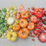 The Biggest Mistakes to Avoid When Growing Tomatoes